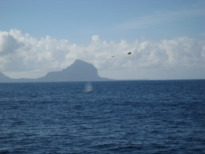 Whale spout while deep sea fishing in Mauritius